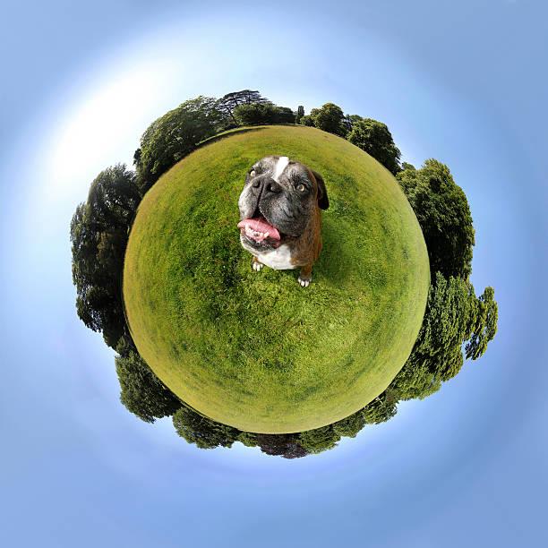 hunde sitting auf einem kleinen planet - andreas weber stock-fotos und bilder