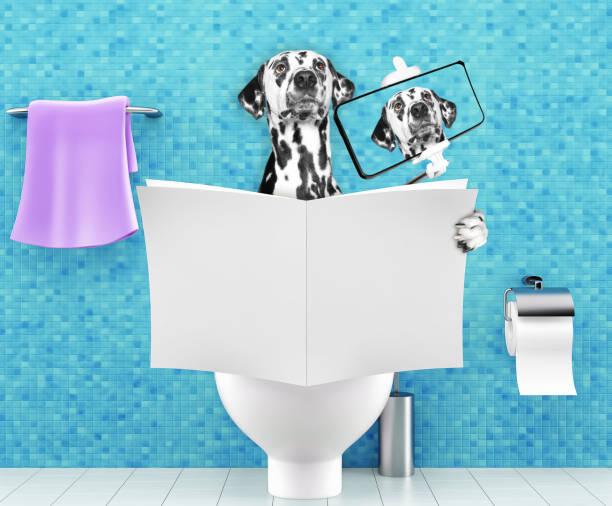hund sitzt auf einem toilettensitz mit verdauungsstörungen oder verstopfung lesen zeitung oder zeitschrift und selfie zu machen - durchfall beim hund stock-fotos und bilder