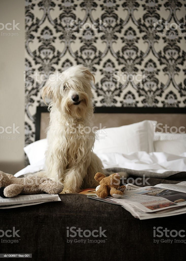 Dog sitting on bed with soft toys and newspaper royalty free stockfoto
