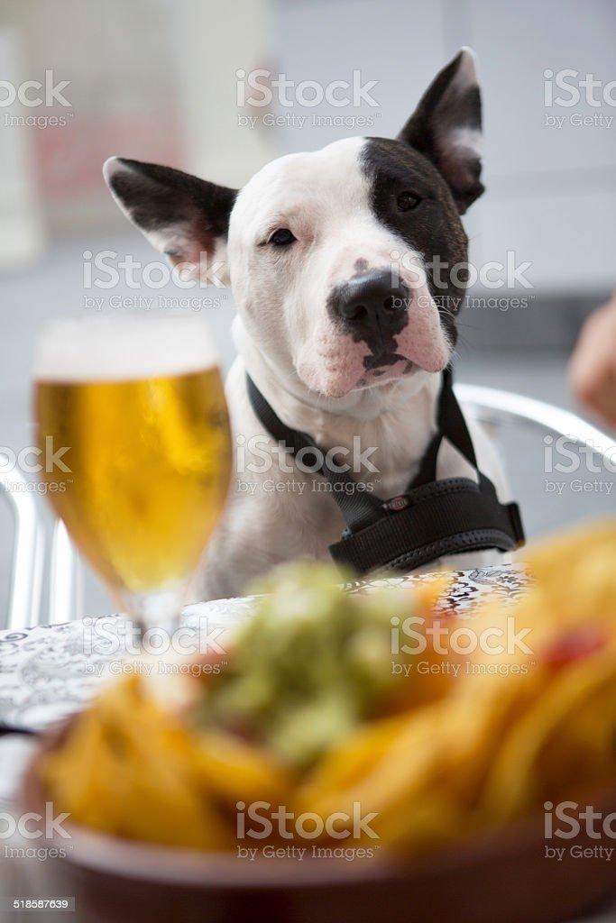 Cane seduto su una sedia - foto stock