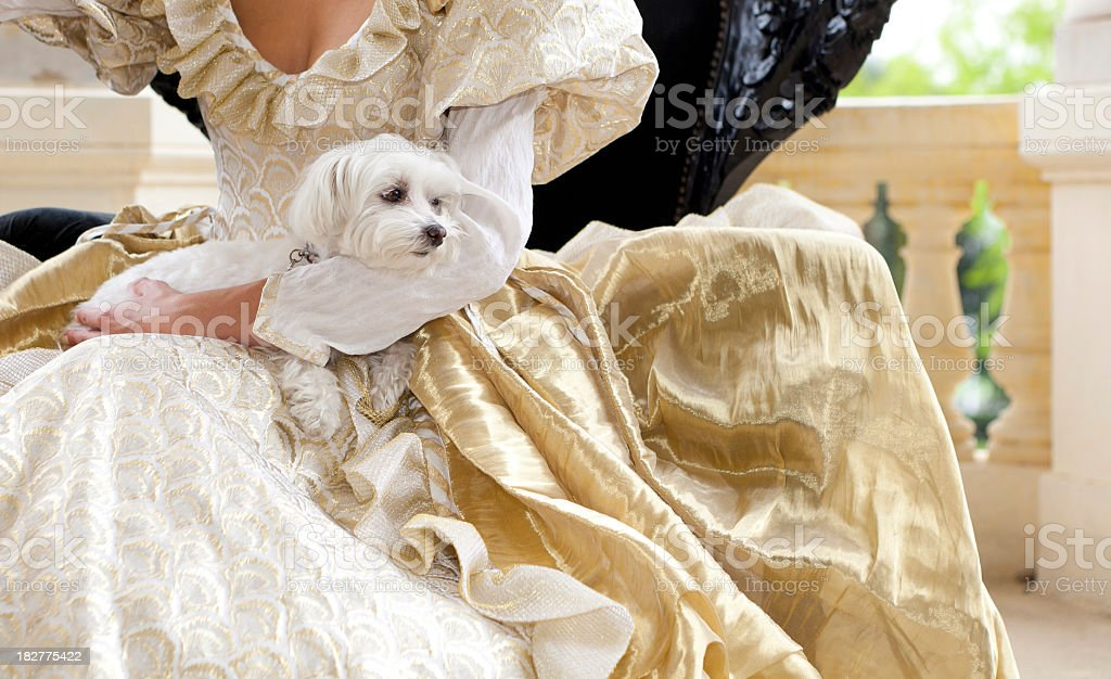Dog sitting on lap of a royal person stock photo