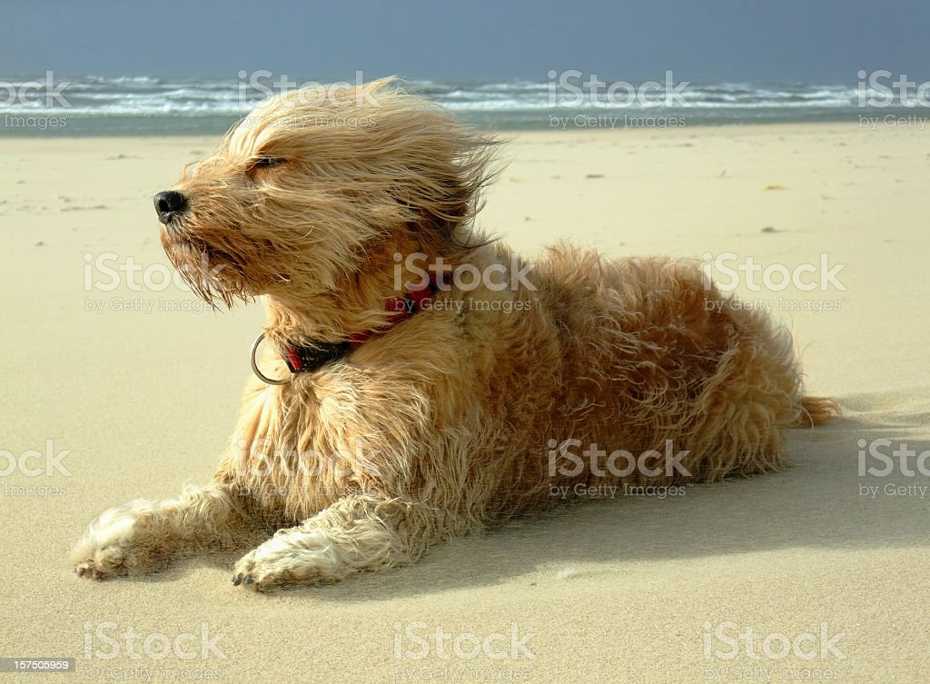 Super Hund – Foto