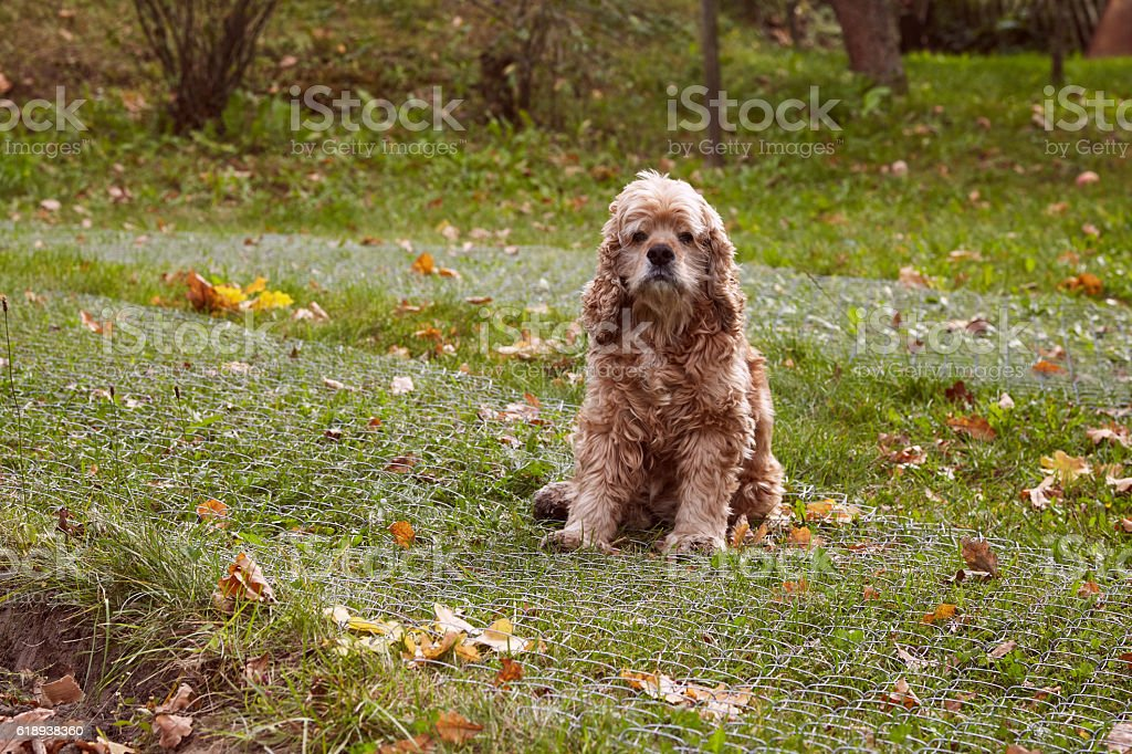 Dog sitting on the broken metal wire fence stock photo