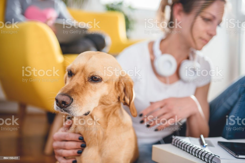Dog sitting on the floor by the woman royalty free stockfoto