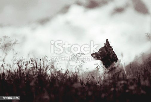 istock Dog Sitting on the Mountain Meadow 866563150