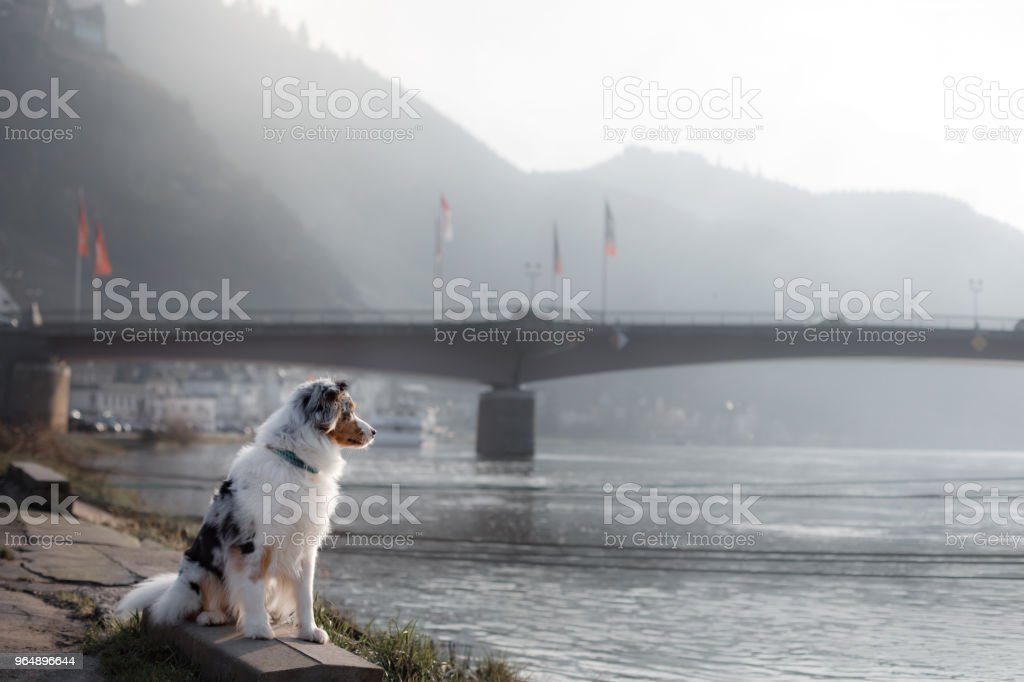 Dog sitting on the promenade near the river. royalty-free stock photo