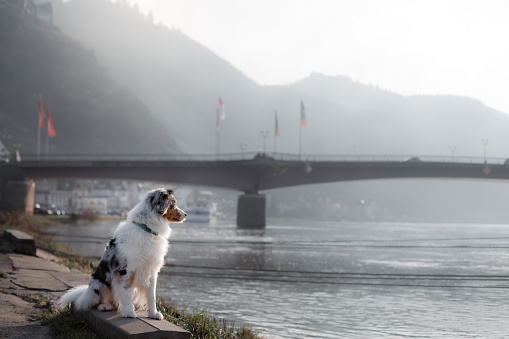 Dog Sitting On The Promenade Near The River Stock Photo - Download Image Now