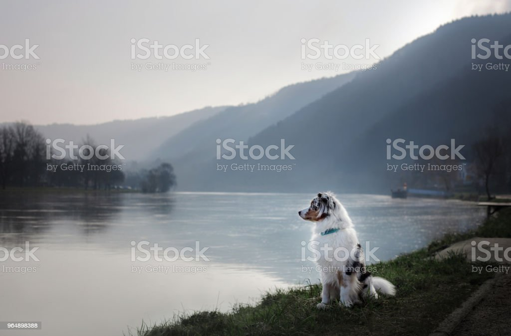 狗坐在河邊的長廊裡。 - 免版稅人體圖庫照片