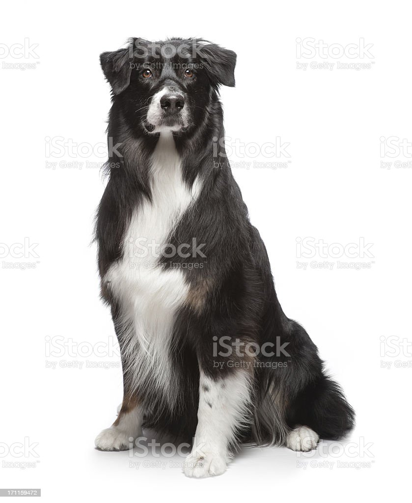 Dog sitting stock photo