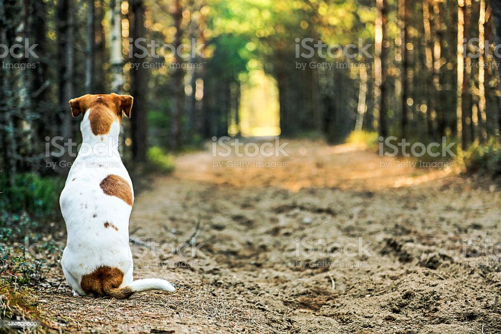 Dog sitting stock photo