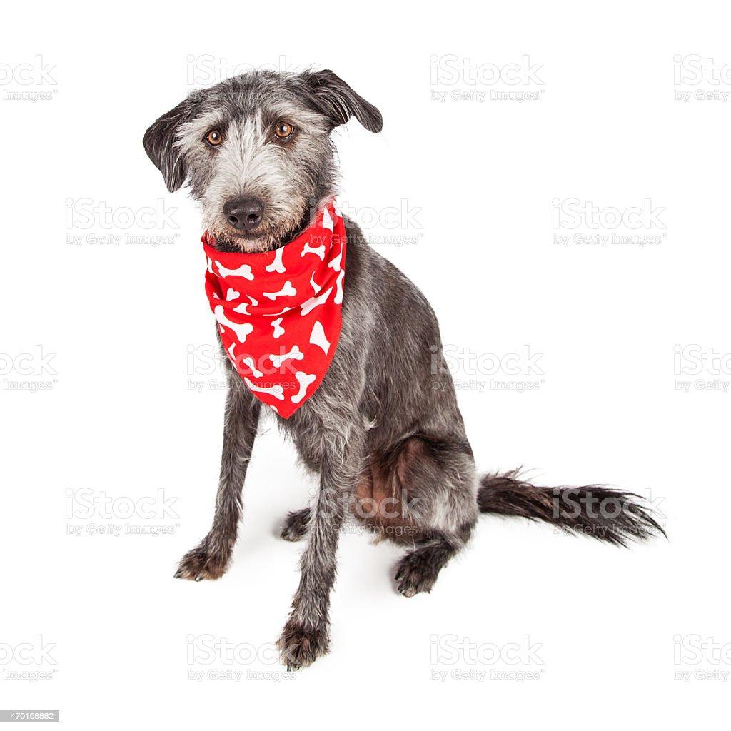 Cane seduto con Rosso Bandana ossea - foto stock