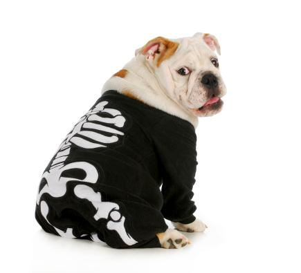 Dog Skeleton Stock Photo - Download Image Now
