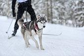 istock Dog skijoring competition 1213272102