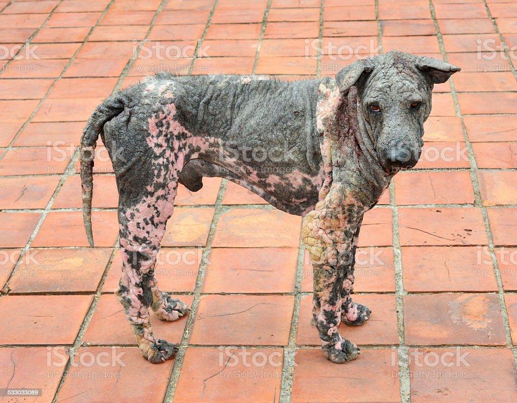 dog skin leprosy stock photo