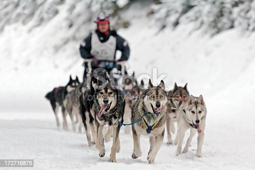 Dog sledding competition.