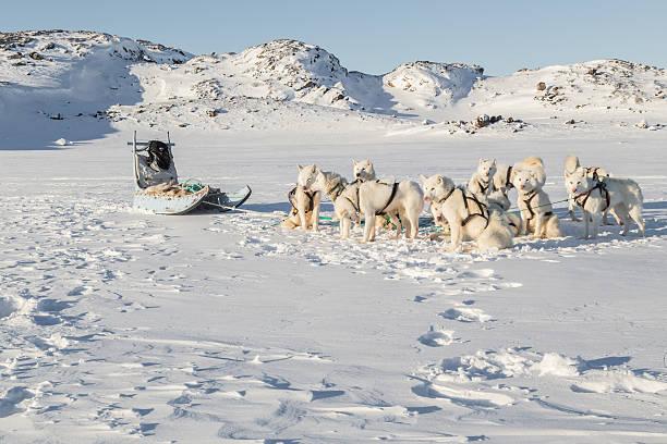 Hundeschlitten-Grönland und Schlitten Hunde in verschneite Landschaft – Foto