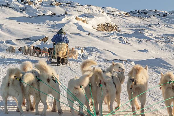 Hundeschlitten-Grönland Hunde ziehen den Schlitten bergauf horizontal – Foto