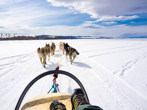 Hundeschlittenfahrten im gefrorenen Baikalsee – Foto