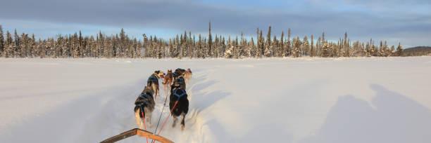 hundspann i lappland - norrbotten bildbanksfoton och bilder