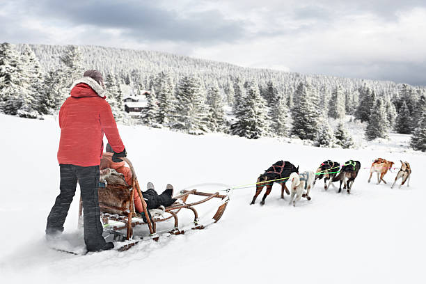 Dog sledding in Norway Dog sledding in Norway in Nordseter area.  sled dog stock pictures, royalty-free photos & images