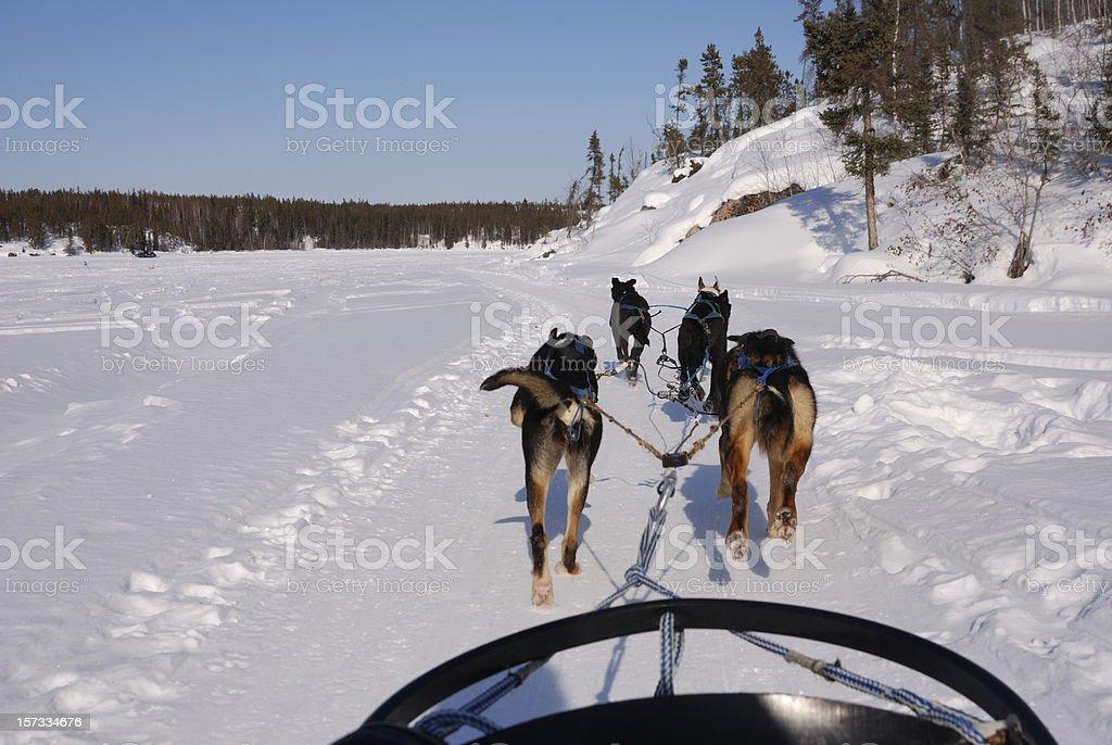 Dog sledding in the Arctic. stock photo