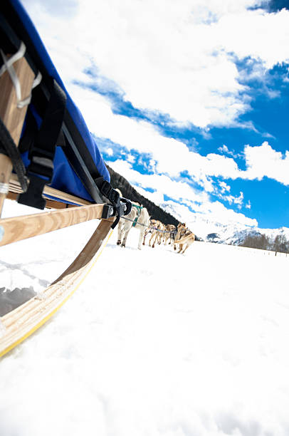 dog sledding in winter - kellyjhall stock pictures, royalty-free photos & images