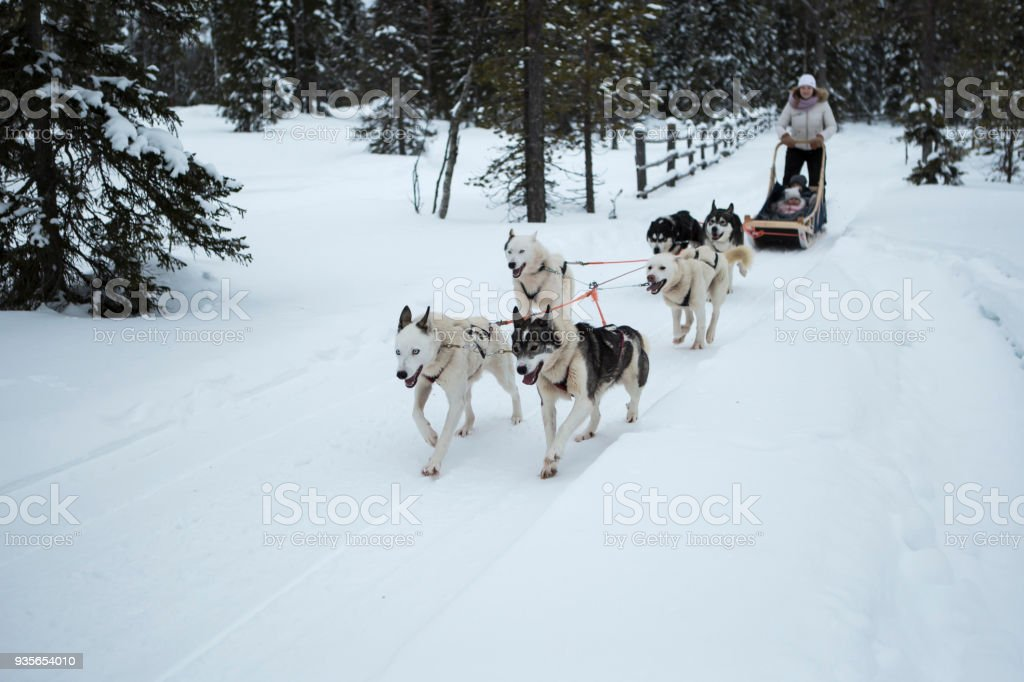 Dog Sledding stock photo