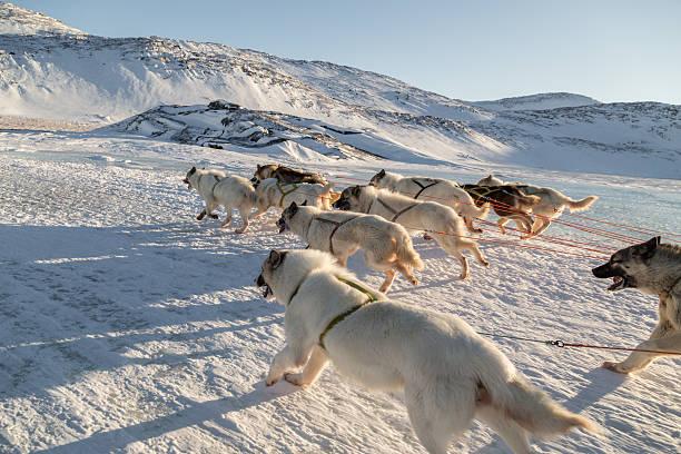 Hundeschlitten-Seitenansicht des schnellen Lauf Grönland Hunde – Foto