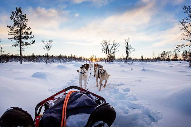 Hundeschlitten mit huskies im wunderschönen Sonnenuntergang – Foto
