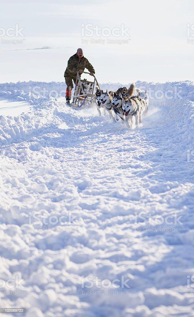 Dog sledge race royalty-free stock photo