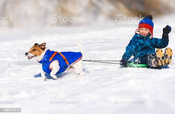 Dog sledging happy boy on slippery downhill toboggan picture id1090573172?b=1&k=6&m=1090573172&s=612x612&h=ndj81ko3azn2twszagcpgk07rqhkp2lipyccramyhx4=