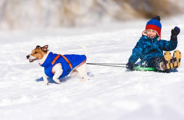 Dog sledging happy boy on slippery downhill toboggan picture id1090573172?b=1&k=6&m=1090573172&s=612x612&w=0&h=u9nu8nxanjikfayir40bmgbaw6n0bgkztfna17rggvg=