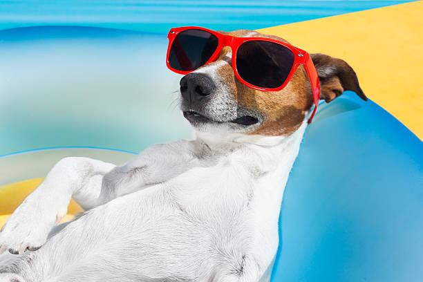hund schlaf im sommer - hunde träger stock-fotos und bilder