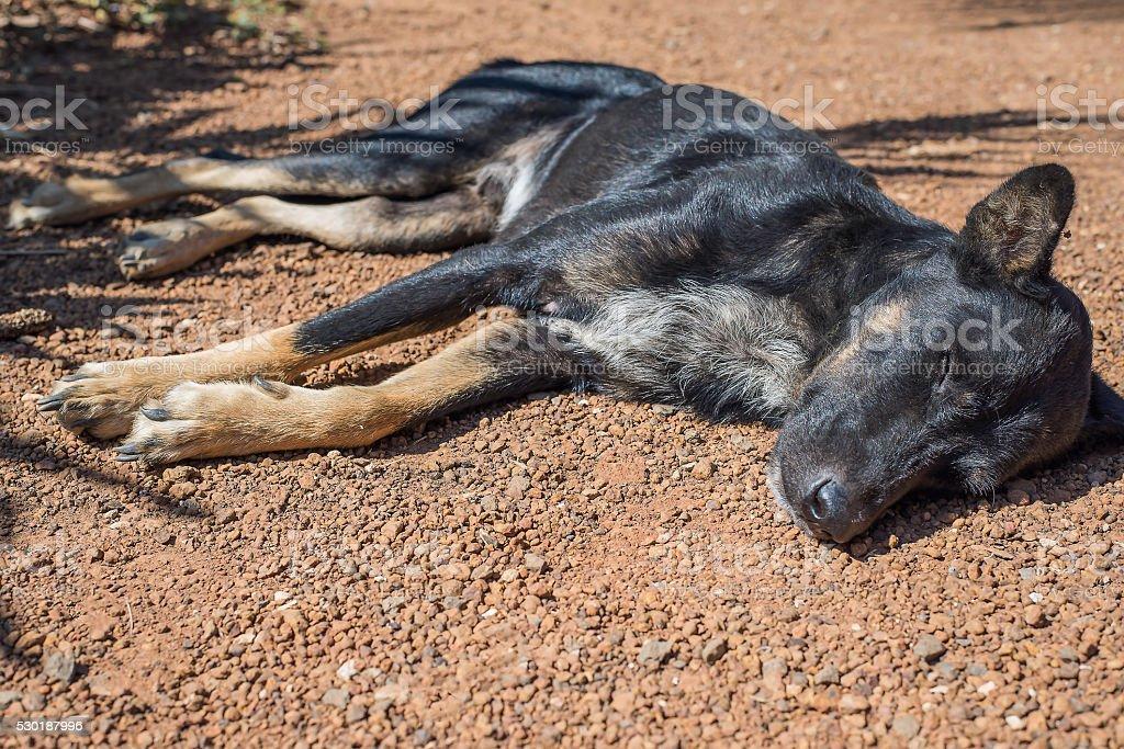 Dog sleep on the ground stock photo