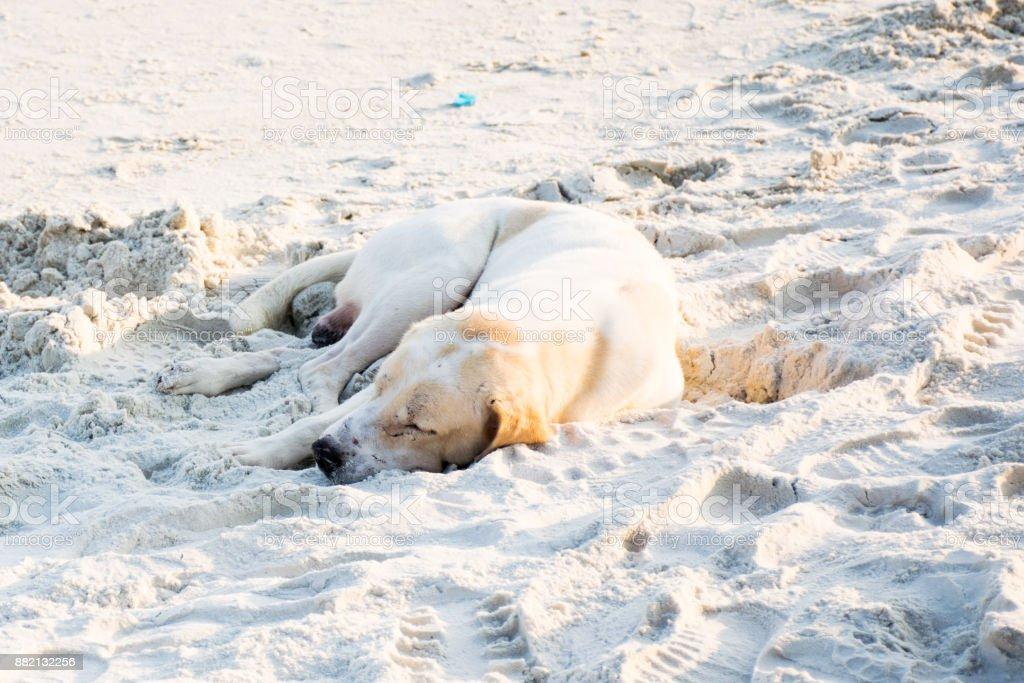 Sueño de perro en la playa de arena blanca - foto de stock