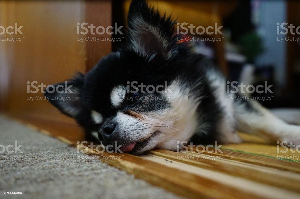 気持ちよさそうに眠る犬を撮影しました