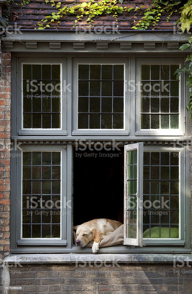 Dog Sleeping in a Window of House royalty-free stock photo