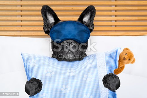 istock dog sleeping in bed 579226214