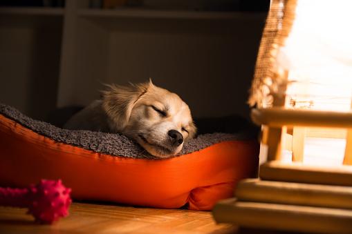 Dog sleeping in his bad