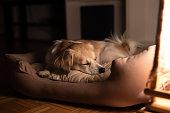istock Dog sleeping in his bad 1209343968