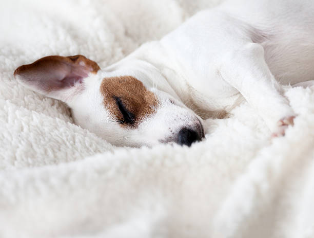 Dog sleeping on a bed stock photo