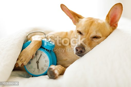 istock dog  sleeping or dreaming in bed 1025300130