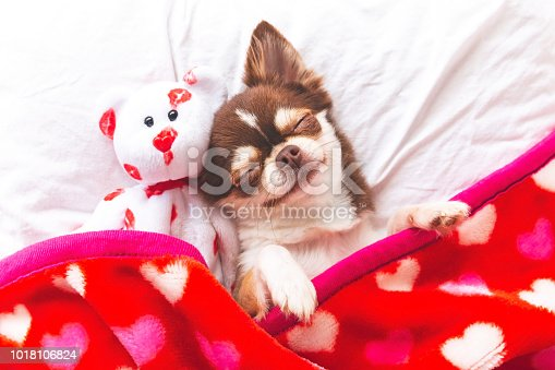 Cute chihuahua puppy sleeping with teddy bear on the white bed,Vintage style