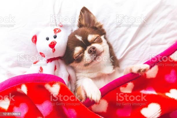 Dog sleeping picture id1018106824?b=1&k=6&m=1018106824&s=612x612&h=80im4o2c4saakwkdllwjav pmshqhgvk6hzkdfjsic8=