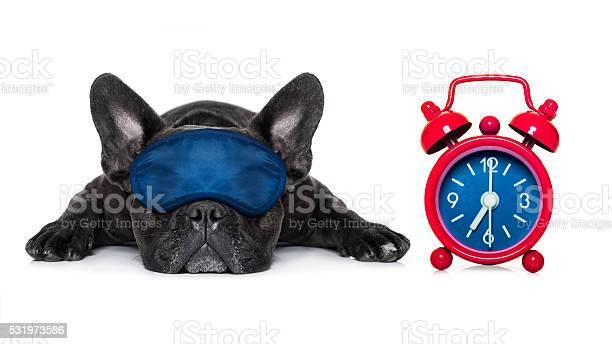 Dog sleeping picture id531973586?b=1&k=6&m=531973586&s=612x612&h= 3nomelxybrex5wr3oh7ztmq8g9 9xj gxswftfoegs=
