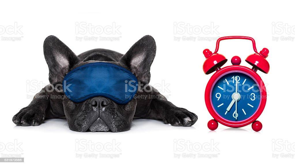 Cachorro dormindo - foto de acervo