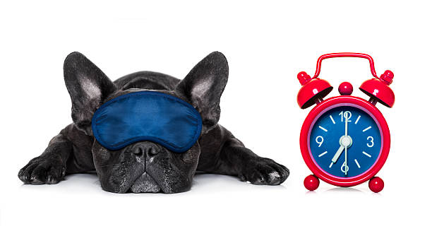hund schlafen - hunde träger stock-fotos und bilder