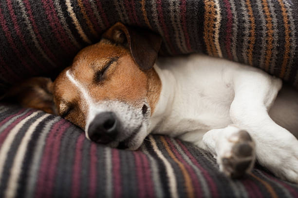 Dog sleeping picture id537303305?b=1&k=6&m=537303305&s=612x612&w=0&h=bnw3p97jrizbqgq1dqumohkxvu3eu3xf1t0z6gyoci8=