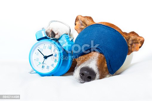 istock dog sleeping with clock 594014498
