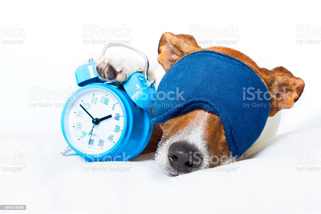 dog sleeping with clock - foto de acervo